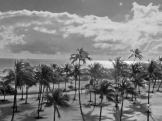 Gretchen Palm Trees BW-med